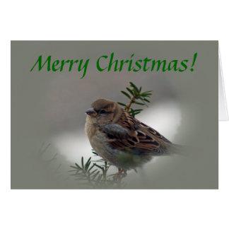 Merry Christmas Sparrow Card