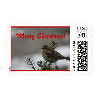 Merry Christmas, Sparrow Postage