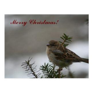 Merry Christmas Sparrow! Postcard