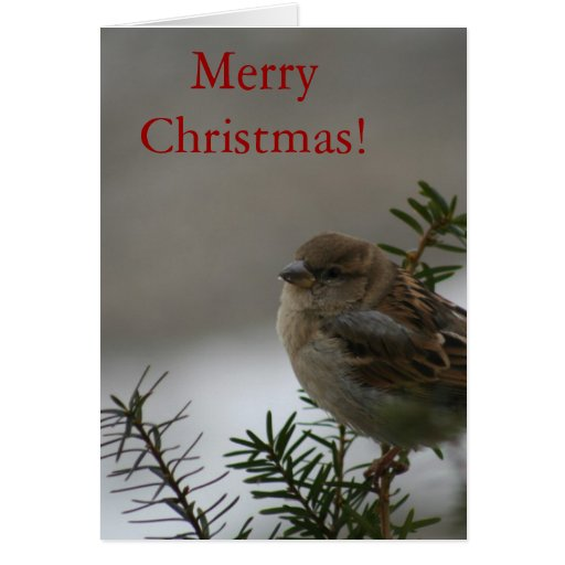 Merry Christmas Sparrow! with Scripture Cards