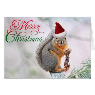 Merry Christmas Squirrel Greeting Cards