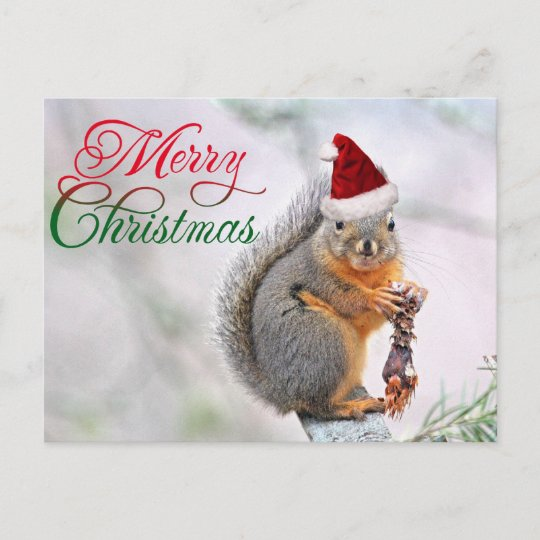 Christmas Squirrel.Merry Christmas Squirrel Holiday Postcard