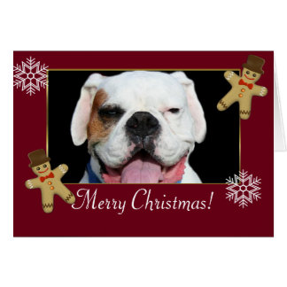 Merry Christmas  White Boxer Dog Cards
