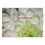 """Merry Christmas"" White Dahlia Raindrops Greeting Greeting Cards"