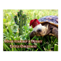Merry Little Christmas - Desert Tortoise Postcard