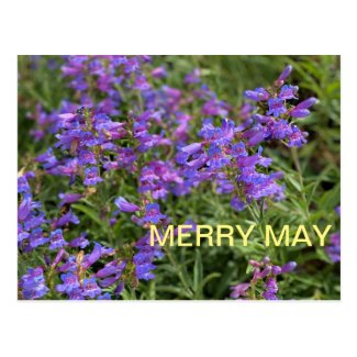 Merry May Postcard