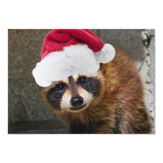 Merry Raccoon Christmas Announcement