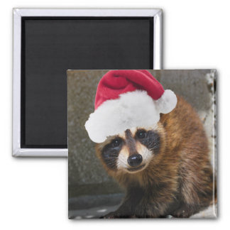 Merry Raccoon Christmas Magnets
