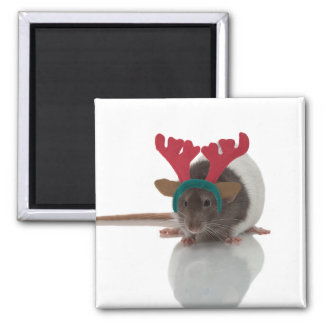Merry Ratmas Magnets