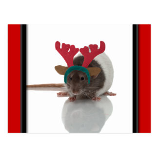 Merry Ratmas Post Cards