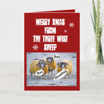 Merry Xmas from the three wise sheep Holiday Card