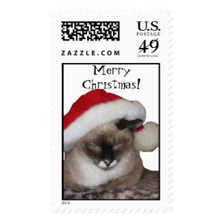 ¡MerryChristmas Sello del gato
