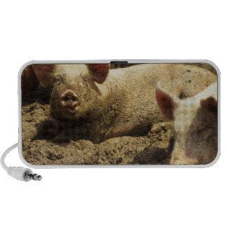 MES: Ste Genevieve, granja de cerdo Altavoces