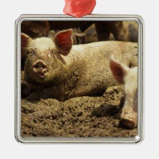 MES Ste Genevieve granja de cerdo Ornamentos De Reyes