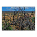 """""""Mesa Verde National Park"""" collection Greeting Card"""