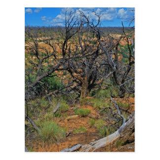 """Mesa Verde National Park"" collection Postcard"