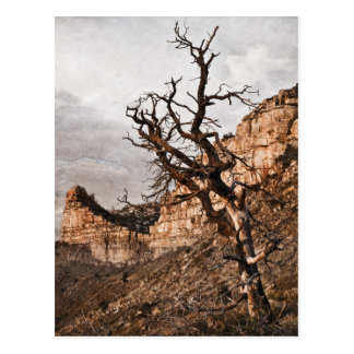 Mesa Verde Postcard
