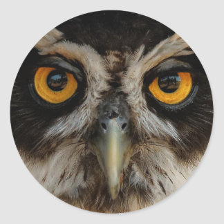 Mesmerizing Golden Eyes of a Spectacled Owl Classic Round Sticker