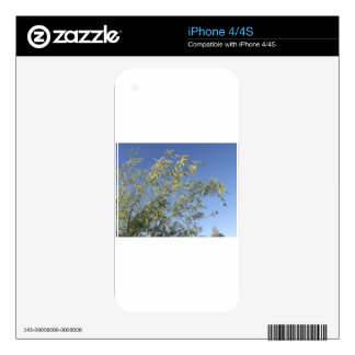 Mesquite Branches Against Sky iPhone 4 Skin