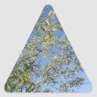 Mesquite Branches Against Sky Triangle Sticker
