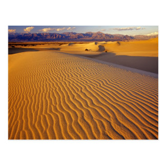 Mesquite Flat Sand dunes in Death Valley Postcard