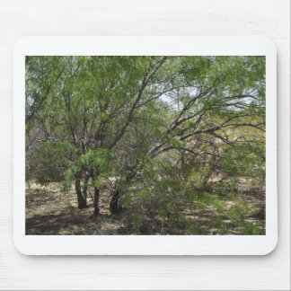 Mesquite Trees Mouse Pad