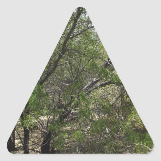Mesquite Trees Triangle Stickers