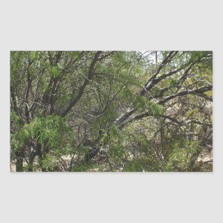 Mesquite Trees Rectangular Stickers