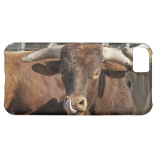 Mess With the Bull You Get the Horns iPhone 5C Cover