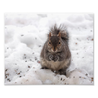 Messy Squirrel Photographic Print