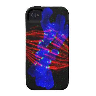 Metafase de Mitotic iPhone 4/4S Fundas