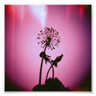 Metal Dandelion Photo Print