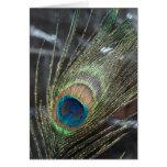 Metalic Peacock Feather Greeting Card