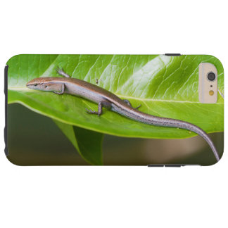 Metallic Cool Skink Niveoscincus Metallicus Tough iPhone 6 Plus Case