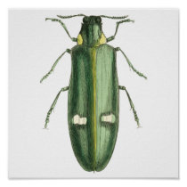 Metallic Wood-Boring Beetle Poster
