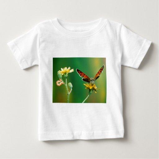 metamorfosis maravillosa de las mariposas polera
