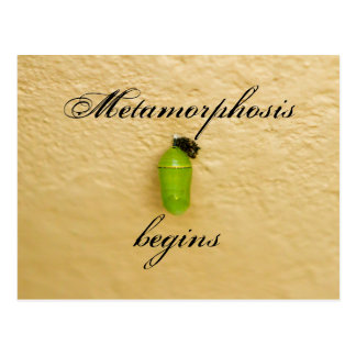 Metamorphosis Begins Monarch Butterfly Green Postcard
