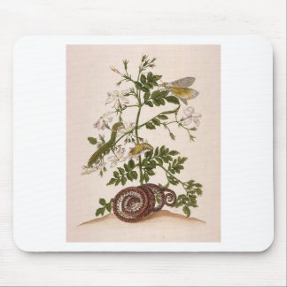 Metamorphosis insectorum Surinamensium Mouse Pad
