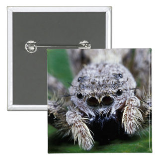 Metaphid Jumping spider Metaphidippus sp) Button