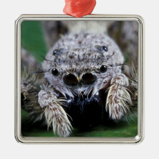 Metaphid Jumping spider Metaphidippus sp) Metal Ornament