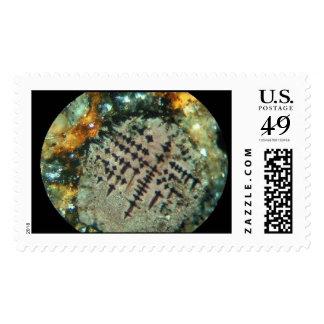 Meteorite JAH 055 thin section Stamp
