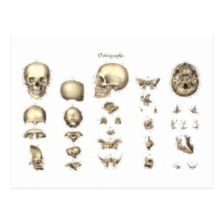 Methodical anatomy of the skull post cards