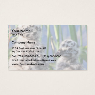 Mew Gull Chicks Business Card