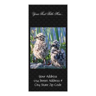 Mew Gull Chicks Rack Card Template