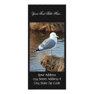 Mew Gull Rack Card Template
