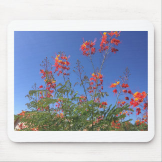 Mexican bird of paradise mouse pad