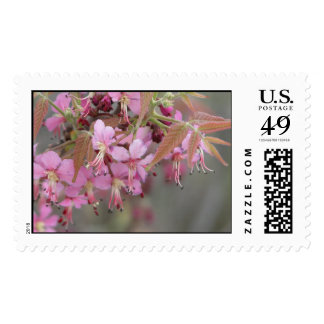 Mexican Buckeye in Bloom Postage Stamp
