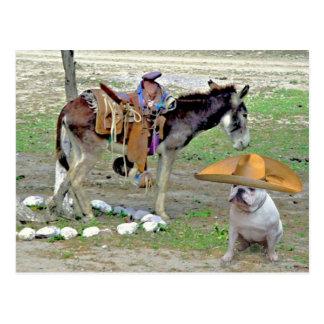 Mexican Bulldog Postcard