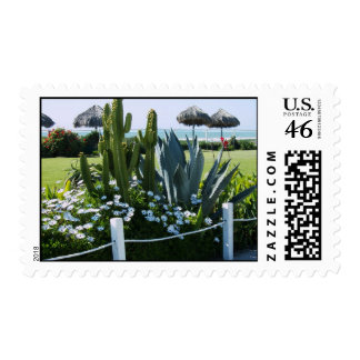 Mexican Cacti at Rosarito beach Postage Stamps