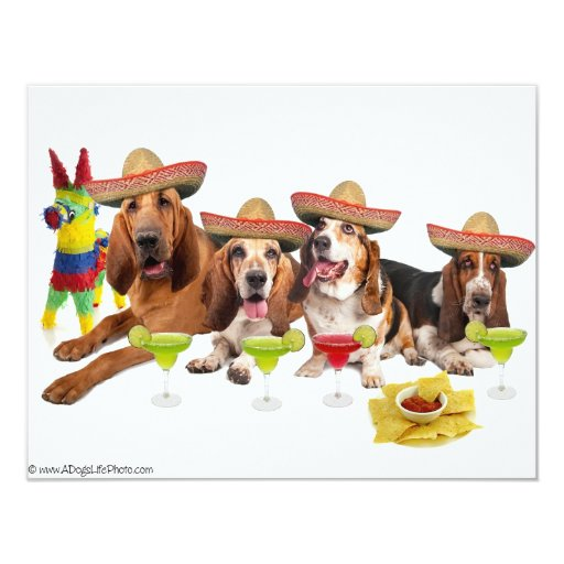 "Mexican Fiest 4.25"" X 5.5"" Invitation Card"